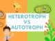 perbedaan autotrop heterotrop